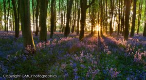 Sunrise over Bluebell wood by GMCPhotographics