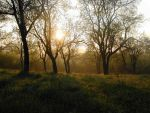 Foggy morning by Morpher-inc