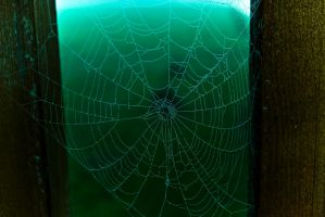 Web by netherl