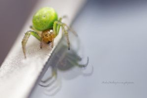Green Spider by Stridsberg