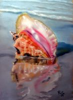 Solitary Conch by Papillon53