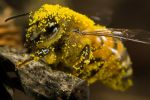Covered in Pumpkin Pollen III by dalantech