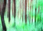 some rainy forest watercolor ... by mondspeer