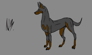 Dobermann template by NocteBruti