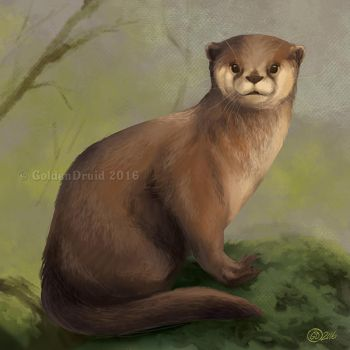 Sitting Otter - SpeedPaint by GoldenDruid