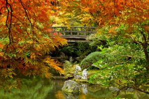 Through the Japanese Maple by SonjaPhotography