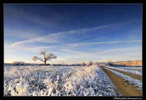 Frost Sunrise II by Shahenshah