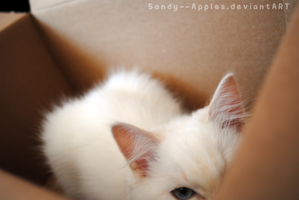 Who's In The Box? by Sandy--Apples