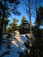 Woods - Snowy - Sunny 1 by hrimthurs-stock