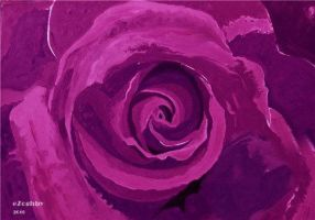 Purple Rose by e-Zoghby