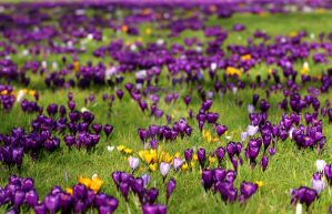 looks like spring's coming... by clochartist-photo