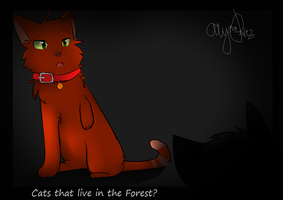 Cats That Live In The Forest...? by Firestar101