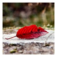 Red Leaf by Aconitum-Napellus