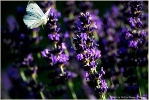 flight to the next flower by brijome
