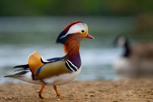 Mandarin Duck by SlinkyJynx