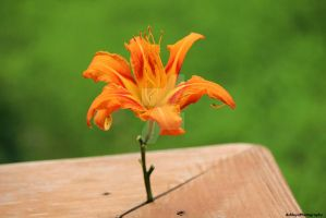 DayLily by Dragon-Queen-101