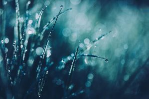 Blue Morning Dew by JoniNiemela