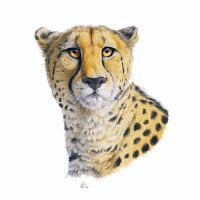 Cheetah portrait by theOlven