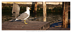 Venice - The Seagull by InsanaFobia
