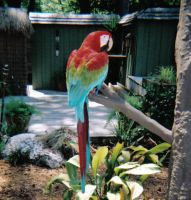 Macaw by phantaz