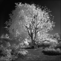 Tree Infrared b+w... by MichiLauke