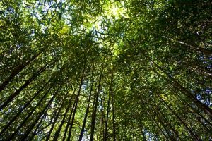Bamboo Seclusion by l337Jacqui