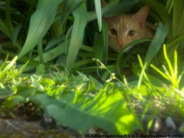 Kitty Stealth Mode Activated by MARscianimefiVEL