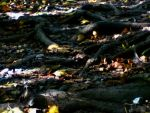 Decew Roots by SmashCakes