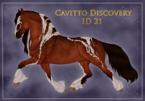 Cavitto Discovery 21 by sVa-BinaryStar