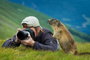 Marmot ID by AndreasResch