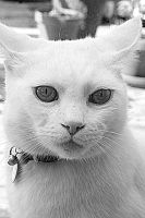 White whiskers II by Of-Heliotropes