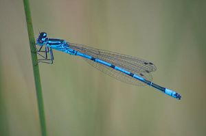 Damsel Fly 3693 by filmwaster