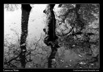 Leaves on Water by Andrew-and-Seven