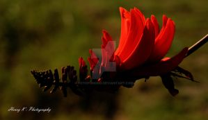 curved-red-petals II by fotoponono