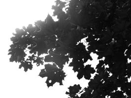 Leaves by LouisTN
