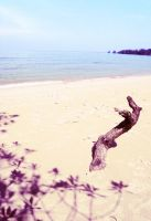 sand, sea and a tree branch. by sodaMay