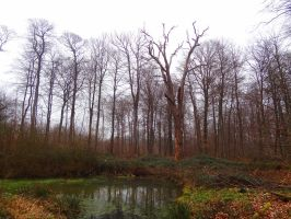 Foret de Marly by eco6org