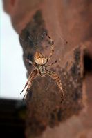 SPIDER AND WEB AUGUST 2015  61 Fotor by LUSHMONTANAS