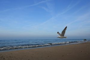 Fly seagull fly by Angie-Pictures