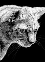 Cat in Charcoal by aLyTeh