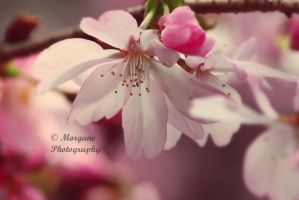Wisdom of a flower. by MorganePhotography