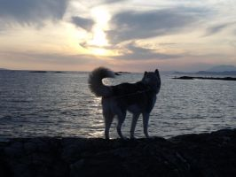 Nanuki Under The Arisaig Sunset by ropa-to