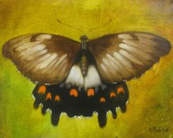 Butterfly SOLD by graemeb