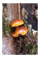 Little Fungus by Pagan-Inspiration