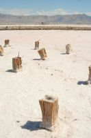 Stumps in the Sand by greenwalled1