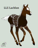 LLS Lachlan by LittleLace