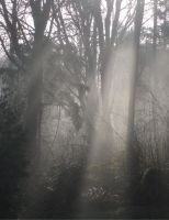 Forest Mist by Smyley