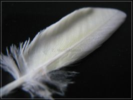 Feather of an Angel? by WhitePhoenix7
