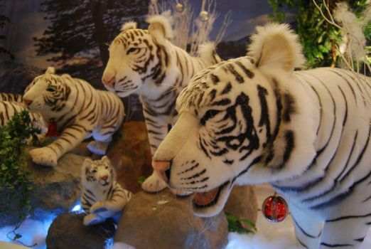 White Tigers by iamcaryl