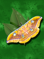 Jamamaj Moth by Andycoco